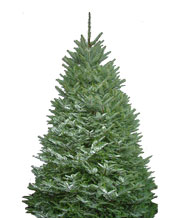 Mjw Services Your Holiday Christmas Tree Shop We Deliver And Set